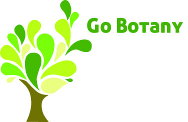 Go Botany - Plant identification on a computer or tablet near you